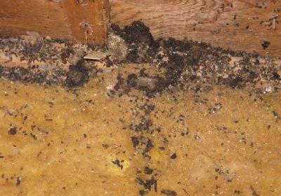 termite build up