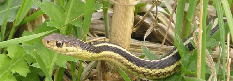 snake on wood and leaves