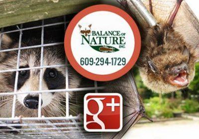 balance of nature google plus logo