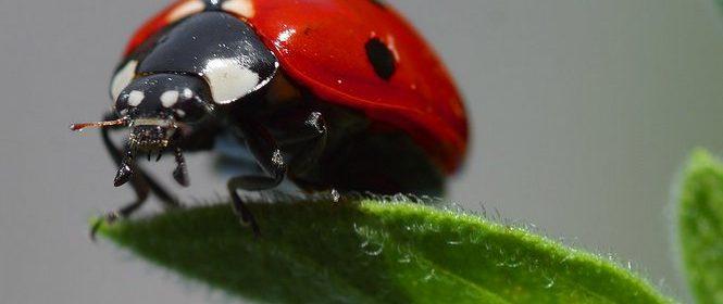 lady bug on leaf