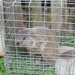 gopher in cage