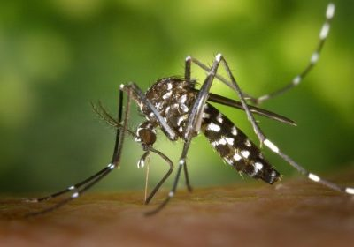 mosquito peircing skin